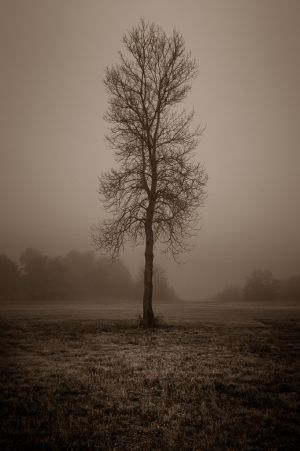 fog and night - 15.jpg