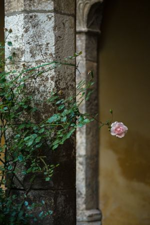 Cloister and Flower